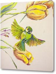 Постер Райская пташка