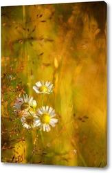 Caledula flowers.