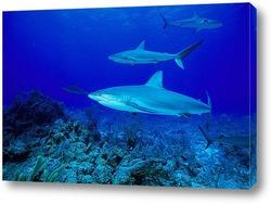 shark006
