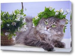 Постер Мисс Весна
