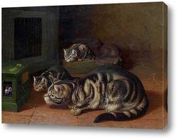 Кошки в аквариуме