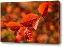 Постер Арония осенью