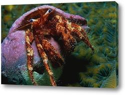 crab002