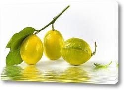 Постер Лимоны