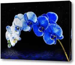 Постер Синяя орхидея над водой