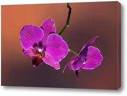 Мягкий розовый цветок крупным планом