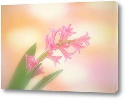 Flower743