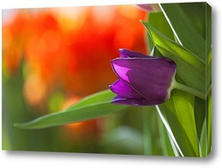 Постер сиреневый тюльпан