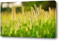 Постер Луговые травы
