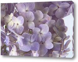 Flower812