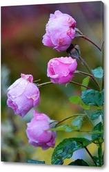 Постер Розовые розы в росе