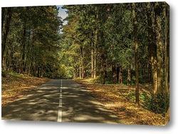 Постер Дорога между деревьями