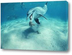 Постер Dolphin122