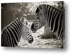 Постер Портрет двух зебр.Эффект сепия
