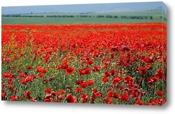 poppies isolated on white background- border angle of page