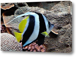 fish118