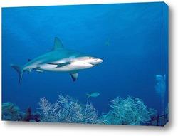 Постер Shark001