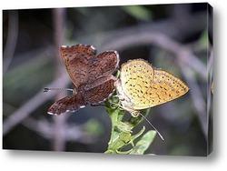 Черешня и бабочка