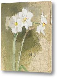 Постер Нарциссы