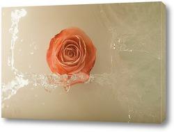 Постер Натюрморт с розой