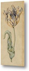 Постер Тюльпан