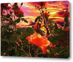 Butterfly and beautiful sky and cloud