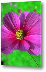Flower262