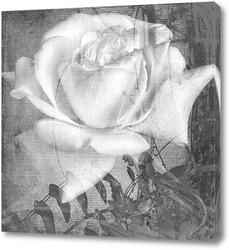 Монохромные розы