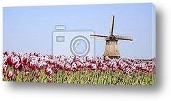 Постер Tulips and windmill 7