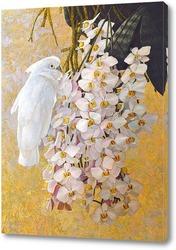 Постер Попугай и орхидеи