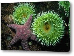 Постер Starfish017