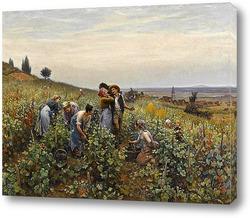 Картина Сбор урожая