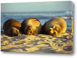 Постер Seal004