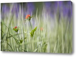 Картина цветы в луговой траве