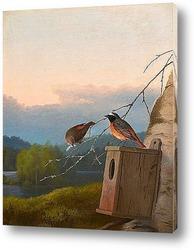 Маленькие птицы на крыше