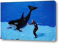 dolphin095