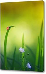 Постер красивая маленькая божья коровка ползет по весеннему лугу с нежными белыми цветами и сочной зеленой травой