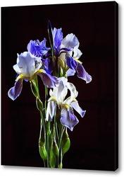 Постер Бело-голубые ирисы на черном