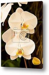 Прекрасные желтые орхидеи на черном фоне