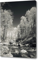 Постер Горная река на Алтае 4
