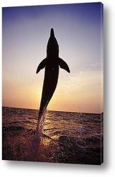 dolphin112