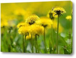 Постер Одуванчиковая весна