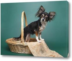 Постер Забавная собака породы той-терьер в плетеной корзине на зеленом фоне