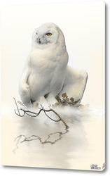 Постер Полярная сова