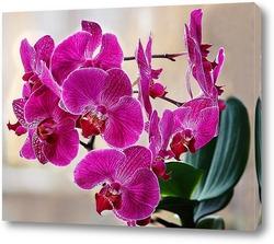 Orchidee, zart