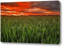 Постер Пшеница в закате