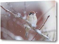 Постер воробей под снегом