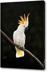 Постер Попугай Какаду