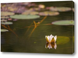 Постер лилия и глубина