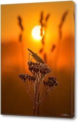 Кузнечик на цветке в лучах восходящего солнца
